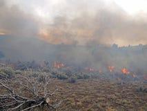 Le feu de terres non cultivées photographie stock libre de droits