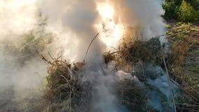 Le feu du feu brûle des brindilles banque de vidéos