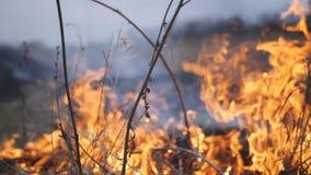 Le feu a englouti l'herbe sèche dans la campagne banque de vidéos