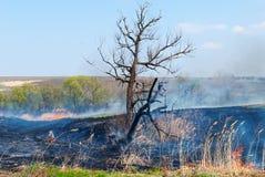 Le feu et cendres Photo libre de droits