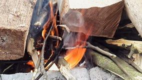 Le feu superbe de brûlure de mouvement lent du bois dans la forêt banque de vidéos