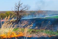 Le feu sur le champ Photographie stock libre de droits