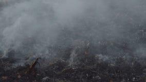 Le feu sur un champ sec d'usine banque de vidéos