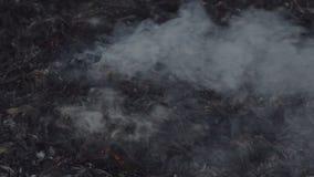 Le feu sur un champ sec d'usine clips vidéos