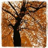 Le feuillage d'automne part du jaune de Montréal Photographie stock