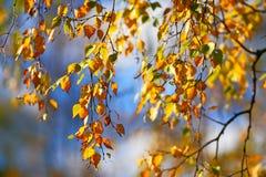Fond des feuilles d'automne Photographie stock libre de droits