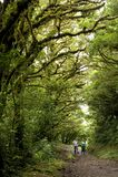Le feuillage luxuriant et vert entoure les nombreux sentiers de randonnée en nuage Forest Reserve de Monteverde en Costa Rica images libres de droits