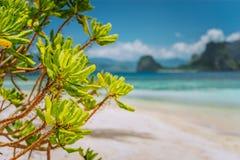 Le feuillage vert tropical d'usines de plage aux cabanes de Las échouent avec l'île brouillée de Malpacao à l'arrière-plan Beau v images stock