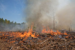 Le fiamme ed il fumo da un fuoco prescritto bruciano Immagine Stock