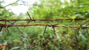 Le fil de clôture près de la forêt verte image libre de droits