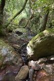 Le filet de l'eau entre les roches et les rochers de la gorge du Blavet Image libre de droits