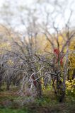 Le filiali nude degli alberi in autunno parcheggiano Immagine Stock