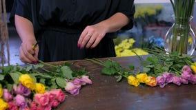 Le fleuriste que la femme dispose des fleurs pour lier des coupes s'est levé des épines dans le magasin, mains de plan rapproché clips vidéos