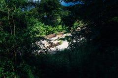 Le fleuve Photos stock