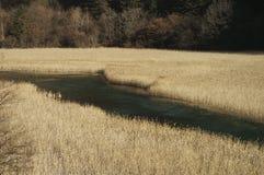 Le fleuve passent par les roseaux Photo stock