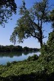Le fleuve Sacramento Photo libre de droits