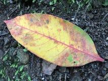 Le foglie Fotografia Stock