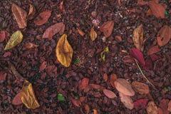 Le foglie accatastano sul pavimento Immagini Stock Libere da Diritti