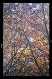 Le foglie asciutte di autunno variopinto confinano la retro annata della struttura immagini stock