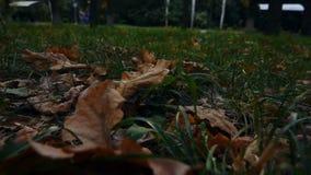 Le foglie asciutte mettono sull'erba video d archivio