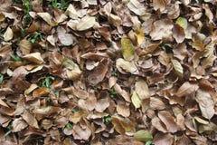 Le foglie cadenti nell'erba Fotografia Stock