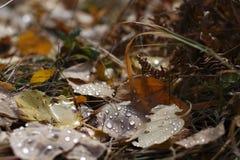 Le foglie cadute immagini stock