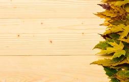 Le foglie cadute autunno si sono raccolte nella fila su fondo leggero Concetto di stagione di caduta Foglia secca acero su luce n immagini stock