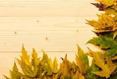 Le foglie cadute autunno si sono raccolte nella fila su fondo leggero L'acero ha asciugato la foglia sul fondo di legno della luc immagini stock libere da diritti