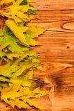 Le foglie cadute autunno si sono raccolte nella fila su fondo leggero, vista superiore Concetto di stagione di caduta Foglia secc fotografia stock libera da diritti