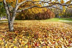 Le foglie cadute variopinte nel parco Fotografie Stock Libere da Diritti