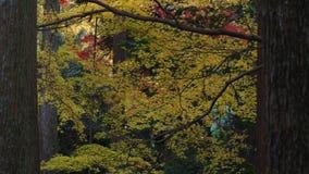 Le foglie cambiano il colore in autunno, Kyoto Immagini Stock Libere da Diritti