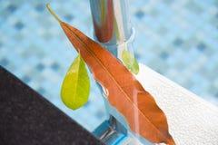 Le foglie che galleggiano nello stagno accanto ad una scala ci ricorda che l'autunno è un momento per pulizia dello stagno Sguard Immagini Stock
