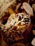 Le foglie che gli insetti hanno mangiato fotografie stock libere da diritti