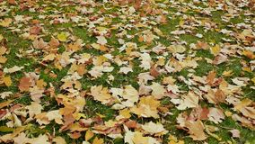 Le foglie colorate cadute si trovano sull'erba verde Un panorama dell'autunno al di sotto dei vostri piedi nel parco Fucilazione  stock footage