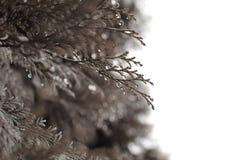 Le foglie con le gocce di rugiada Fotografia Stock Libera da Diritti