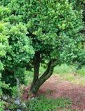 Le foglie con le strutture interessanti ed i tronchi hanno sistemato artisticamente, questa scena sta fuori fotografia stock