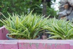 Le foglie del fiore in vasi con i precedenti della natura Fotografie Stock