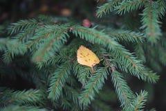Le foglie del recinto Fotografia Stock