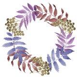 Le foglie del viburno si avvolgono in uno stile dell'acquerello Fotografia Stock