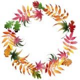 Le foglie del viburno si avvolgono in uno stile dell'acquerello Fotografie Stock Libere da Diritti