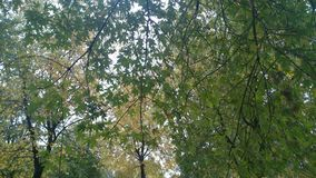 Le foglie dell'albero Fotografie Stock Libere da Diritti
