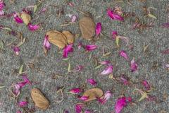 Le foglie dell'albero di orchidea fioriscono sul pavimento del cemento Fotografia Stock