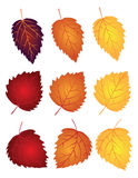 Le foglie della betulla nella caduta colora l'illustrazione di vettore Fotografie Stock Libere da Diritti