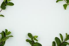 Le foglie della menta fresca Fotografia Stock Libera da Diritti