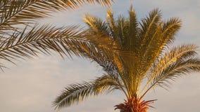 Le foglie della palma si sono accese dai raggi del sol levante stock footage