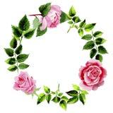 Le foglie della rosa si avvolgono in uno stile dell'acquerello Fotografie Stock