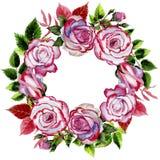Le foglie della rosa si avvolgono in uno stile dell'acquerello Immagine Stock