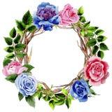 Le foglie della rosa si avvolgono in uno stile dell'acquerello Immagini Stock