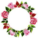 Le foglie della rosa si avvolgono in uno stile dell'acquerello Fotografie Stock Libere da Diritti
