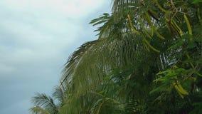 Le foglie delle palme su un fondo del cielo stock footage